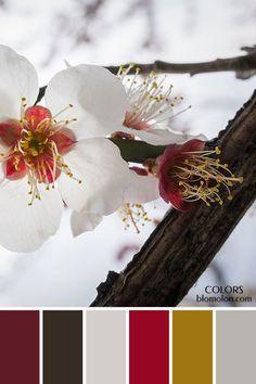 paletas de colores 21 variedad de color 3
