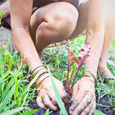 The knowledge of how to live in harmony with nature is free and available to anyone who puts their hands in the soil...but if you need a little extra help click on the link in our bio!!! We have so many free resources for you.   #permaculture #ecology #permaculturewomen  #freepermaculture #healyourself #growfoodnotlawns #foodnotlawns #growyourown Lawns, Grow Your Own, Permaculture, Ecology, Knowledge, Live, Nature, Instagram, Food