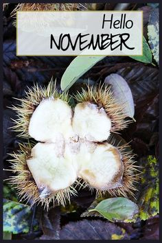 Hello November! Celebrate November with a Planning Calender listing special US celebrations thoughout the month! Free download!