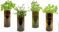Lugar para plantar temperos e ervas? Que tal em garrafas de vinho?? :)