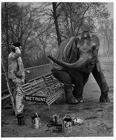 vintage everyday: 18 Interesting and Funny Vintage Photographs of London Zoo in the 1930s