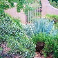 Desert Landscaping Ideas High Desert Landscape Design