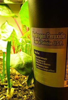 Hydrogen Peroxide for Plants: Natural pesticide, soil aerator and water cleanser