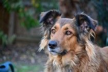 Landmark Ruling: Animals Can Legally Be Considered Victims, Just Like Humans - Oregon Supreme court 2014 Flea Medicine For Dogs, Animals And Pets, Cute Animals, Wild Animals, The Neighbor, What Kind Of Dog, Adoption, Mundo Animal, Animal Welfare