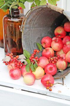 Red Apples against galvanized metal VIBEKE DESIGN