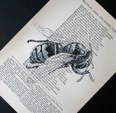 Bzzzz - bee print on salvaged vintage book page.  See more animal & garden prints at www.crowbiz.etsy.com