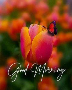 Happy Sunday Morning, Good Morning Texts, Good Morning Greetings, Morning Quotes, Morning Msg, Morning Messages, Good Morning Beautiful Pictures, Good Morning Picture, Good Morning Letter