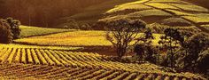 Vineyards at Klein Constantia - Cape Town South Afrika, Namibia, The Beautiful Country, Viria, Travel Pictures, Trip Advisor, Vineyard, Places To Go, Surfing