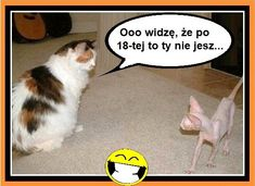 Weekend Humor, Funny Memes, Jokes, Haha, Animals, Motivation, Animales, Husky Jokes, Animaux