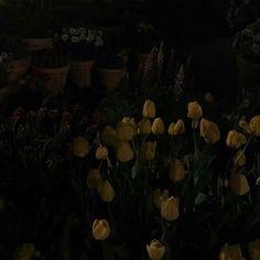 im sorry i loved u. Night Aesthetic, Aesthetic Photo, Aesthetic Dark, Dark Feeds, Dark Paradise, No Rain, Moon Child, Glitch, Foto E Video