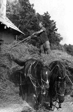 Down On The Farm, Bratislava, Budapest Hungary, Old Photos, Farming, The Dreamers, Horses, Technology, History
