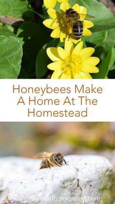 Do you worry about the honeybees? We discuss why we became beekeepers and 6 ways we can help support bees everyday at home. How Did It Go, How To Make, Bee Friendly Plants, Planting Sunflowers, Bee Do, Backyard Beekeeping, Save The Bees, Whole Foods Market, Bee Keeping
