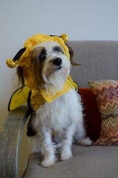 4 Last-Minute Doggy Halloween Costume Ideas   DogVacay Official Blog