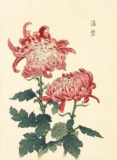Keika Chrysanthemum Wood Block Prints
