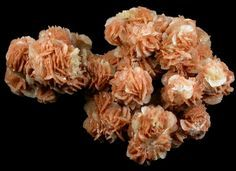 - * Gypsum var Desert Rose * - cm x 5 cm x 3 cm overall size - crystal : 5 - 9 mm - Cottle County; near Paducah, Texas - ❦ CHRYSTALS ❦ semi precious stones ❦ Minerals And Gemstones, Crystals Minerals, Rocks And Minerals, Stones And Crystals, Gem Stones, Gypse, Rocks And Gems, Desert Rose, Science And Nature