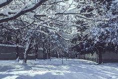 Vlado Lukáč 6_nov.2017 Snow, Outdoor, Outdoors, Outdoor Life, Garden, Human Eye