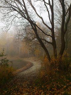 misty lakeside path   nature + landscape photography #adventure