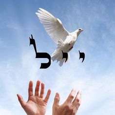 Yud Yud Lamed  Letting Go / Let go of everything you no longer need to be a prisoner of your past. Allow The Light to work miracles and return you to a joyful present. #YudYudLamed #LetGo #Kabbalah #72Names #Light