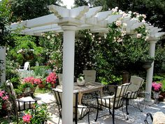 Patio cover with climbing roses
