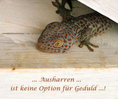 ... #Ausharren ... ist keine Option für #Geduld ...!