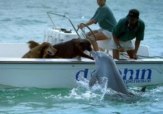 dog + dolphin :)
