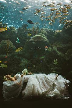 Brooke & Denny's Florida Aquarium Wedding
