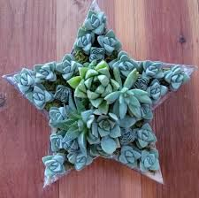 Image result for pinterest succulents