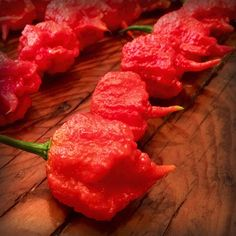 A cross between the Naga Morich and Trinidad 7 Pot, The 7 Pot Primo has a fruity/floral flavor and is extremely hot.