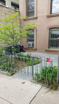 Lots to like here - smooth slate, nice garden zone, interesting fencing, good color combination