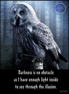 Owl totem meaning. The significance of finding an owl feather symbolizes Owl totem is wishing to work with you on matters of spiritual growth and healing. Owl Quotes, Animal Quotes, Turtle Quotes, Wisdom Quotes, Animal Spirit Guides, My Spirit Animal, Owl Symbolism, Feather Symbolism, Owls