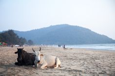 15 Things you must do in Goa, India India Trip, Goa India, India Travel, Transportation Services, Packers, Sri Lanka, Watercolour, Beaches, Travelling