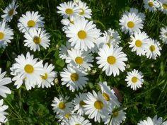 Herbalism, Nature, Plants, Garden, Beautiful, Syrup, Garten, Naturaleza, Planters