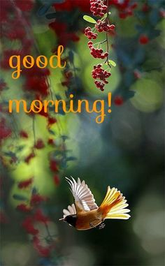 good morning card with bird flying