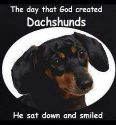 I have two dachshunds, Adeline and Oliver