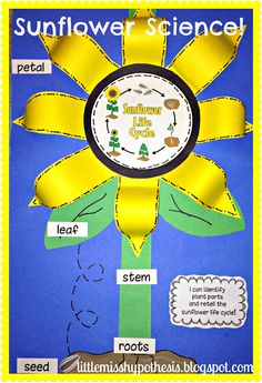 $Little Miss Hypothesis - Lessons from the Science Lab I Can Be A Scientist Exploring Life Cycles newly updated Print and Go fun including sunflowers! 214 pages of Science Fun!