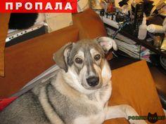 Пропала собака кобель г.Калининград (Кенигсберг) http://poiskzoo.ru/board/read31646.html  POISKZOO.RU/31646 Лайка серого цвета, был в кожаном ошейнике и с .. ошейниками от блох. Пропал ..г в районе Северной горы, .. утром его видели в районе ул. Краснокаменной. Если вы увидели его, большая просьба - звоните.   РЕПОСТ! @POISKZOO2 #POISKZOO.RU #Пропала #собака #Пропала_собака #ПропалаСобака #Калининград #Кенигсберг