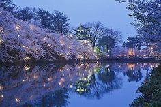 高田城夜桜   高田城夜桜   Hiroshi sato   Flickr