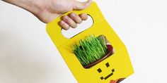 Cool packaging concept for potted plants.