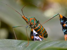 Some of these insects have amazing colour, while others like to keep it on a…