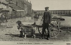 The sled dogs in France