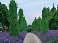 Como planear um jardim   SAPO Lifestyle