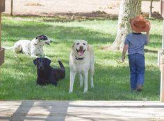 Everyone hanging at TCR Labrador Retriever, Horses, Dogs, Animals, Labrador Retrievers, Animales, Animaux, Pet Dogs, Doggies