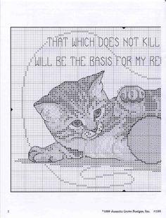 *Gattino e lana 1