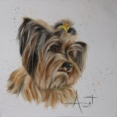 Yorkie commission Oil on canvas SOLD