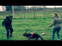 Addestramento pastore tedesco femmina di 8mesi --VulCane Centro Cinofilo--