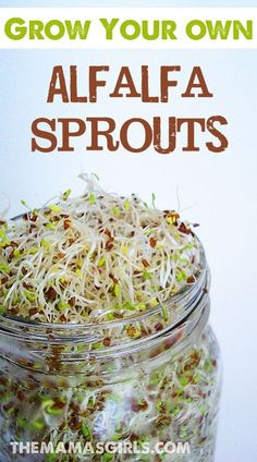 We got these instructions to grow Alfalfa Sprouts from my daughter's teacher years ago when she was in the 4th grade.  It was meant to be an at home experiment to teach them about seed germination, but it was so fun, we continued to make the sprouts to ea