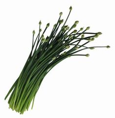 An herb related to onions (Allium cepa) and garlic (A. sativum), chives (A…