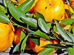 No tempo das tangerinas... Vida Simples - 12/10/2011