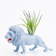 air plant lion planter