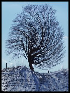 twisted tree | Twisted Tree | Flickr - Photo Sharing! Twisted Tree, Forests, Fingerprint Tree, Michigan Usa, Traverse City, Bare Beauty, Tree Photography, Winter Trees, Bad Hair